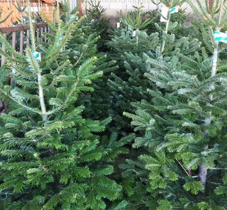 croots christmas trees