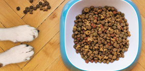 Pet Food Product Category Image